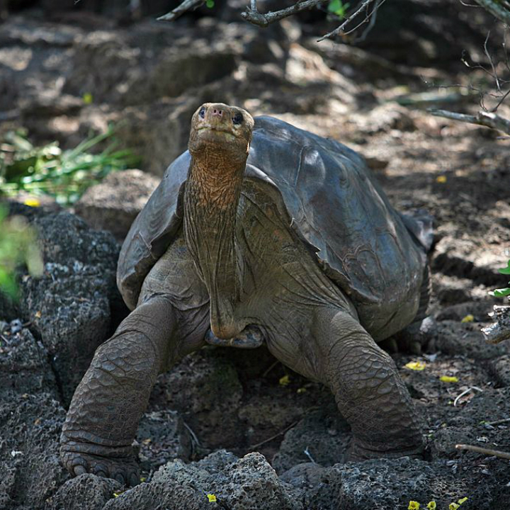 Wonders of the World: Galapagos Islands