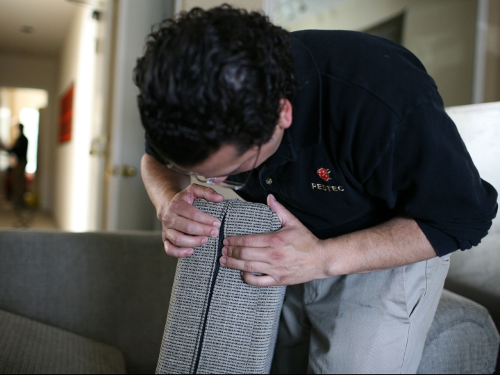 Pestec technician Carlos I. Agurto inspects a couch cushion for bed bugs at an apartment with bed bugs April 30, 2009 in San Francisco, California. Cases of bed bug infestations are on the rise across the U.S. with many people bringing them into their homes after visiting hotels and airports. Bed bugs feed off of human blood